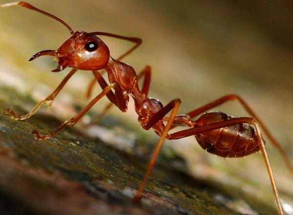 Ловля рыбы на муравьев