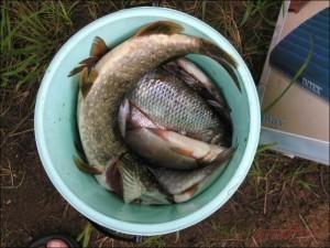 Рыбалка на Ладожском озере