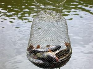 Как сохранить улов пойманный на рыбалке