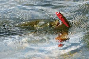 Рыбная ловля на Волге это прекрасно.