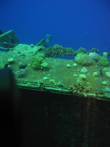 Сафари Красное море
