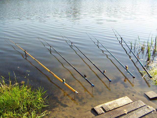 Как правильно выбрать удочку рыбалки летом