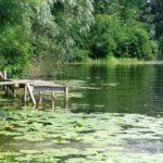 Подходящее место для рыбалки