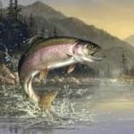 Где водится форель в поисках рыбы