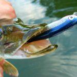 Вываживание рыбы. Совет от fishinga