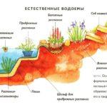 Виды водоемов: характеристики