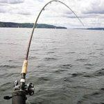 Как поймать на спинниг окуня