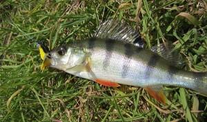 Рыбалка и микроджиг