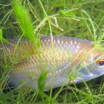 Как выбрать прикормку для рыбы успешный улов