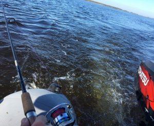 Разновидность рыб Ладожского озера